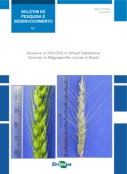 Thumbnail de Absence of 2NS/2AS in wheat resistance sources to Magnaporthe oryzae in Brazil.