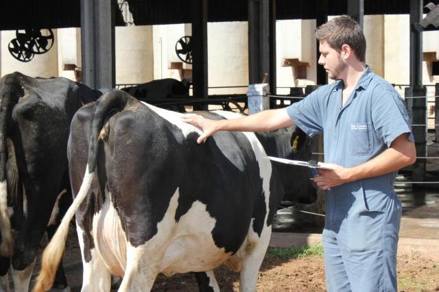 Sistema de monitoramento e inteligência para manejo de rebanhos leiteiros e  automação em sistemas de produção de leite - Portal Embrapa