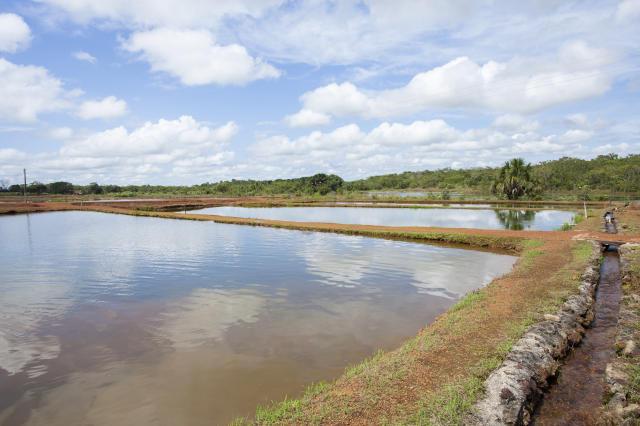 Sele o de plantas de cobertura de taludes de viveiros for Elaboracion de estanques para piscicultura