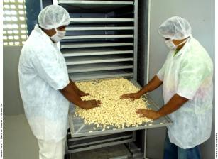 Image of Minifactories for cashew nut processing