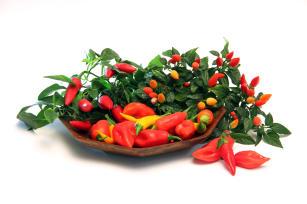 Resultado de imagem para pimentas pimentões