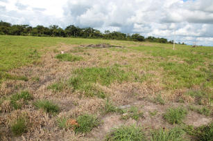 Imagem de Restoration of degraded pastures: validation and technology transfer on the marandu grass death syndrome in Mato Grosso