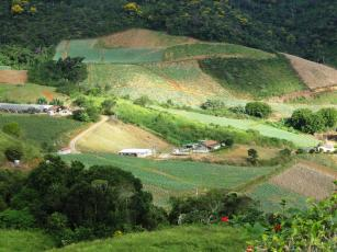 Imagem de Technology transfer and communication actions to support agricultural recovery in the Rio de Janeiro state highlands