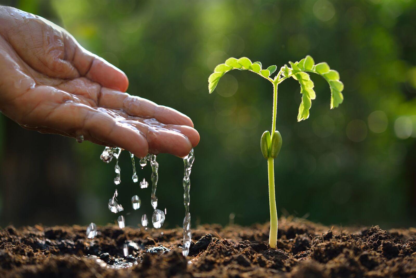 Resultado de imagem para uso da agua na agricultura