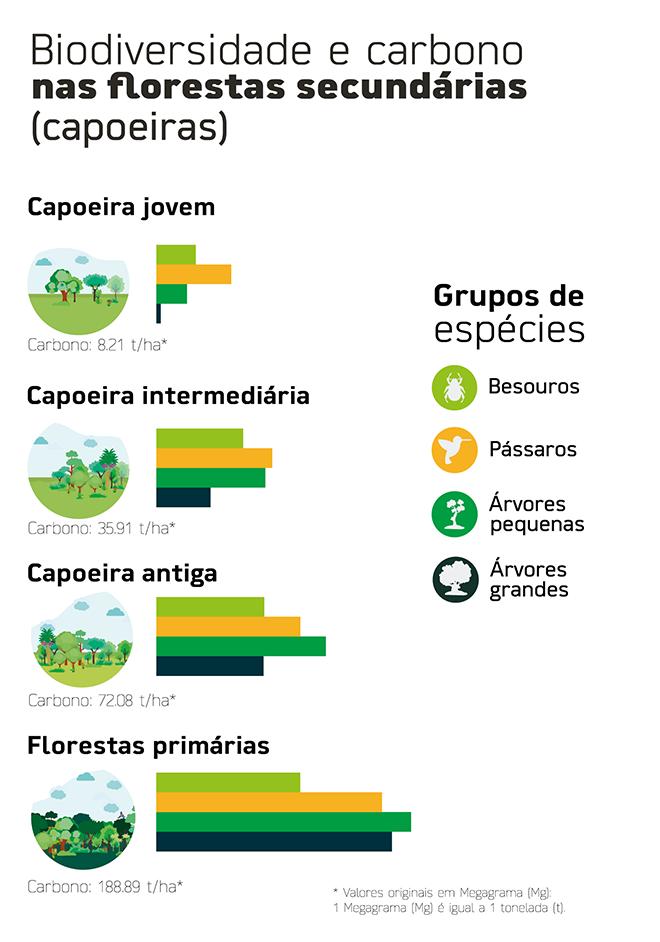 Biodiversidade e carbono em florestas secundárias