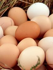 biosseguridade na produção de ovos