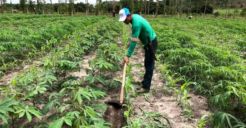Boas práticas em solos degradados geram produção e renda
