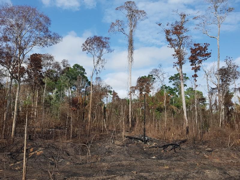 floresta desmatada e queimada