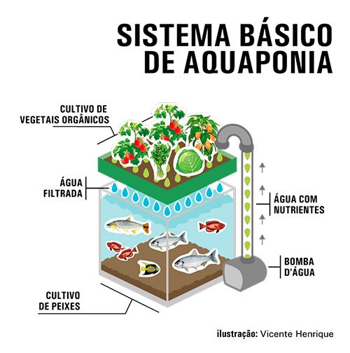Integrar cria o de peixes com hortali as economiza 90 de for Como criar peces en casa para consumo