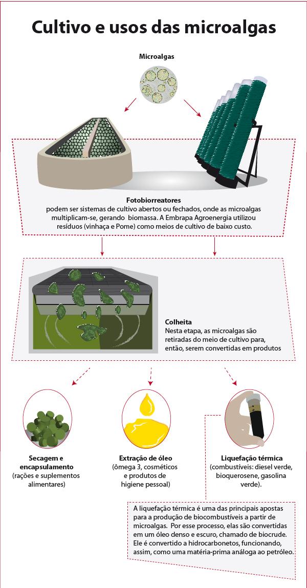 Cultivo e uso das microalgas