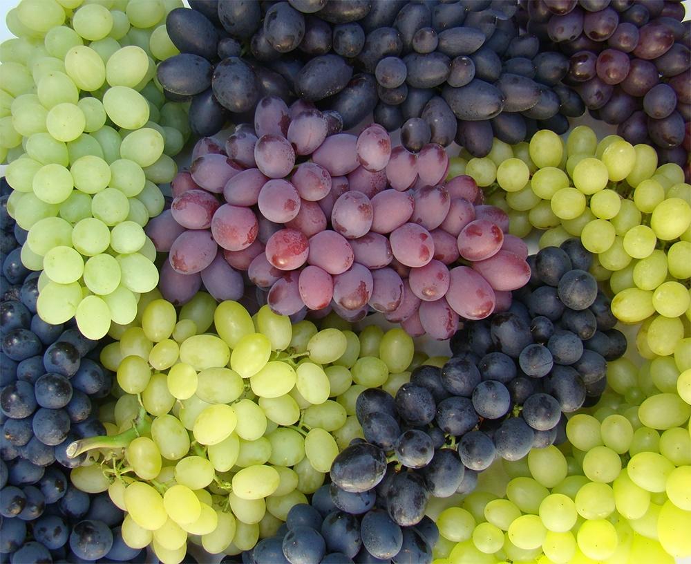 Resultado de imagem para uva de mesa