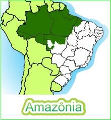 Bioma Amazônia Portal Embrapa
