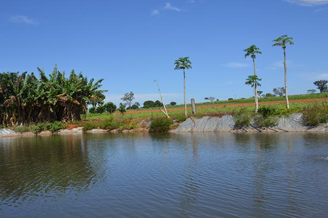 Gustavo Porpino - Tanques para irrigação podem ser povoados com peixes para evitar o surgimento de larvas do mosquito.
