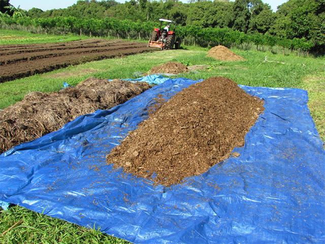 Vídeo mostra como fazer adubo orgânico 100% vegetal - Foto: Agência de Notícias - Embrapa