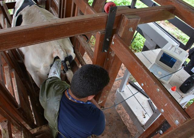 Resultado de imagem para Nova técnica de inseminação artificial aumenta em 20% a prenhez das vacas