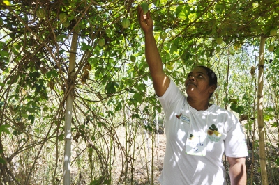 Juliana Caldas - Agricultora Maria Pereira, durante o Dia de Campo