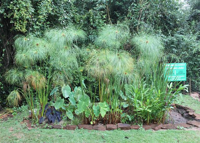 Jardins Filtrantes: Esgoto doméstico rural se transforma em adubo orgânico