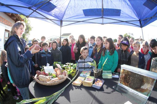 Paulo Lanzetta - Trio de cultivares de batatas-doce da Embrapa foram alvo de atenção de crianças que participaram da Semana do Alimento Orgânico, em Morro Redondo/RS.