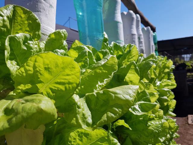 Nicoli Dichoff - Aprenda a montar o sistema no quintal de casa