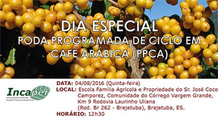 INCAPER promove Dia de Campo sobre Poda Programada de Ciclo de Café Arábica