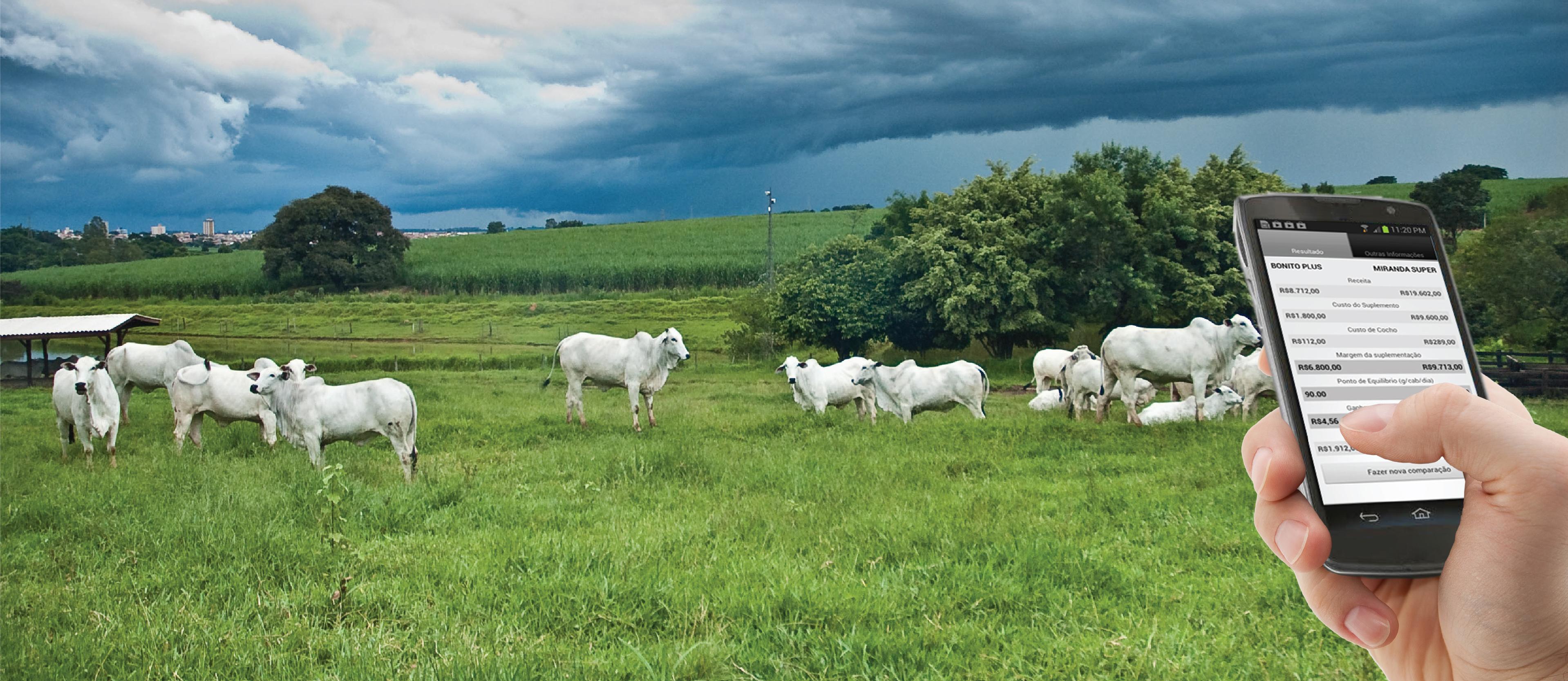 Agência de Notícias - Embrapa - Embrapa lança primeiro aplicativo para  nutrição de bovinos de corte 2686ec07cc7