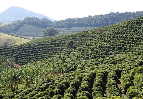 Cafeicultores do Paraná contam com novas tecnologias para a retomada do café no Estado