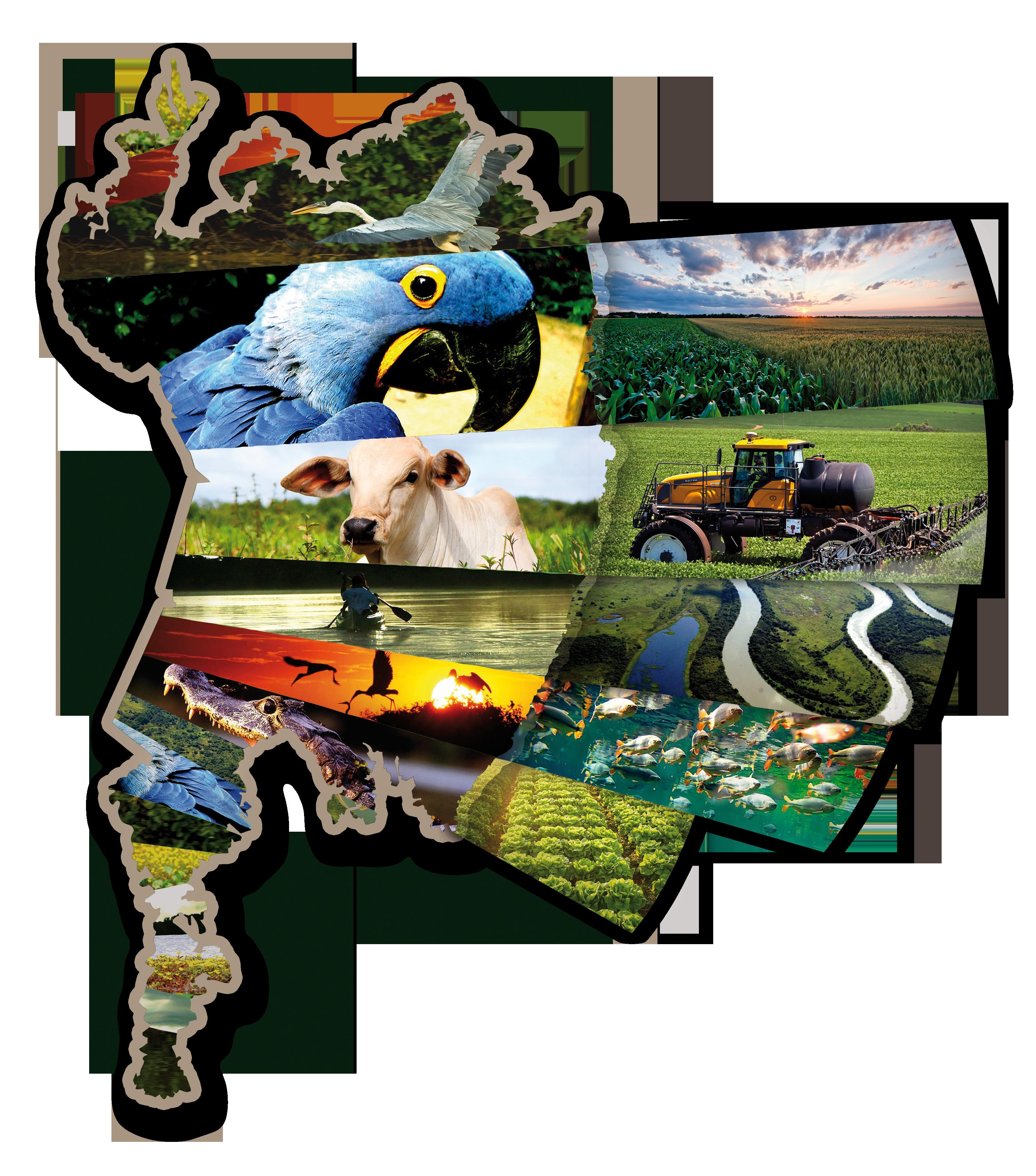 Agência de Notícias - Embrapa - Campo Grande vai sediar 5º Simpósio de Geotecnologias no Pantanal