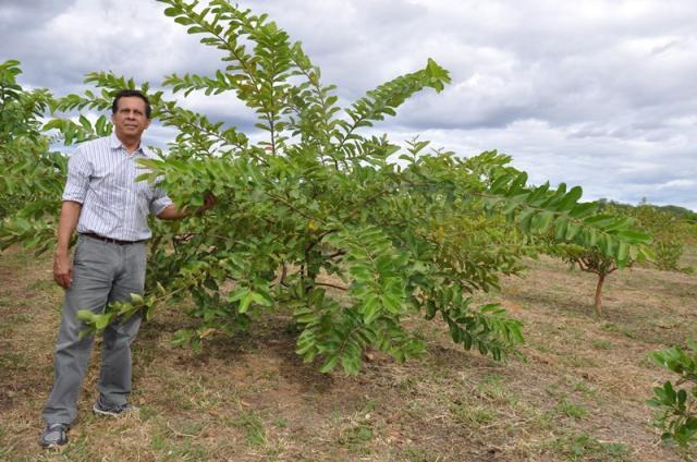 Marcelino Ribeiro - Planta híbrida pode ser a solução