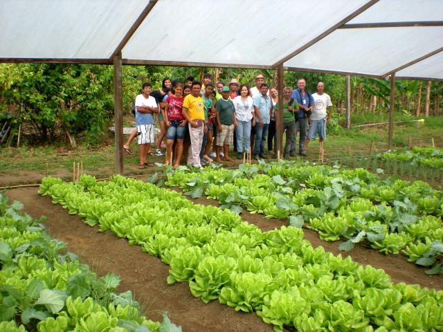 Manejo em horta escolar transdisciplinaridade e sustentabilidade 10