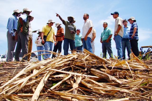 Saulo Coelho - Curso envolve teoria e prática sobre cultura da cana