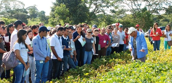 Parcela com feijão na Embrapa em Goiás em sistema agroecológico