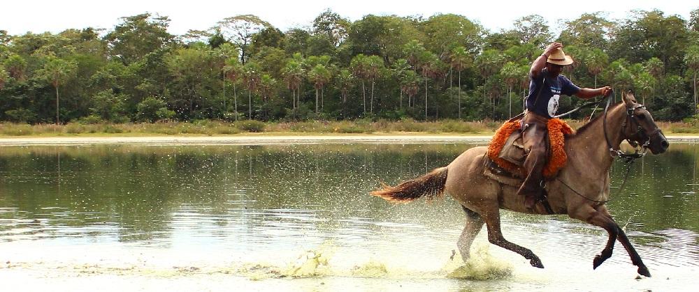Nicoli Dichoff - Estudo avaliou mais de 11 mil animais da raça