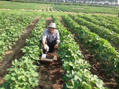 George Vellidis - André Torre Neto em experimento no município de Camilla, na Geórgia (EUA), onde fez mais um pós-doctor no tema irrigação.
