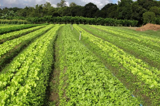Ana Lucia Ferreira - Fazendinha Agroecológica Km 47, em Seropédica/RJ: exemplo de agricultura sustentável