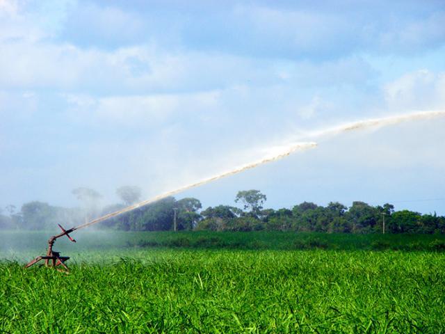 Saulo Coelho - Setor sucralcooleiro apresenta crescimento de áreas irrigadas