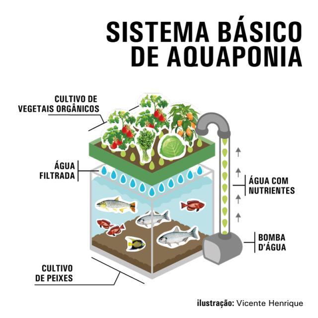 Ilustração - Vicente Henrique - Infográfico demonstra como funciona o sistema