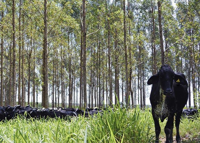 Kélem Cabral - Os sistemas integrados como o ILPF são precozinados pela Embrapa como alternativas sustentáveis para a produção em áreas degradadas da Amazônia
