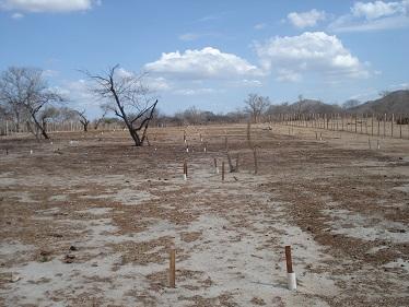 Henrique Antunes - Área com solo muito degradado no interior do Nordeste brasileiro