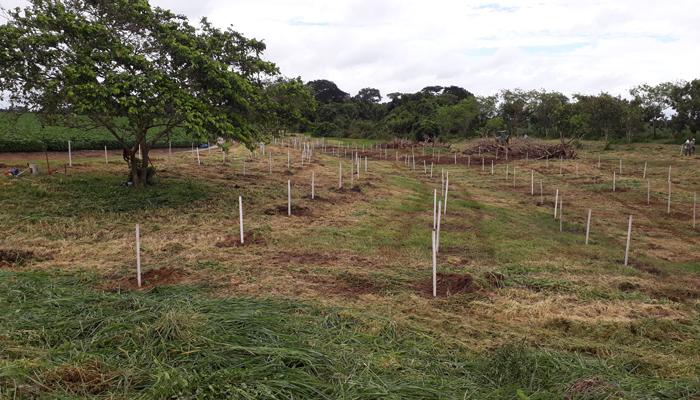 Ingo Isernhagen - Área reflorestada em fazenda em Tapurah