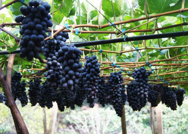 vinhos para principiantes