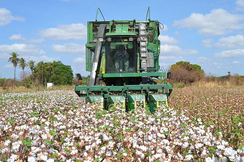 Sérgio Cobel - O Programa prevê ações como a capacitação de técnicos e produtores em novas tecnologias de produção de algodão e introdução de máquinas colheitadeiras