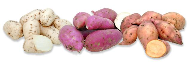 Paulo Lanzetta - Trio de cultivares de batatas-doce da Unidade Pelotas pode ser uma opção de alimento naturalmente biofortificado