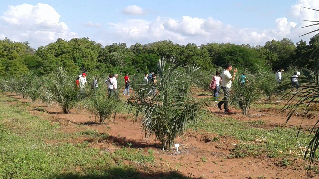 ILPF: Sistema Agroflorestal para gerar alimentos, energia e renda no Nordeste