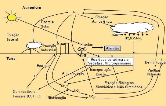 Gomes et al. (2000). - Ciclo do Nitrogênio.