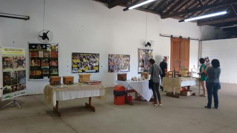 Katia Braga - Exposição abelhas sem ferrão