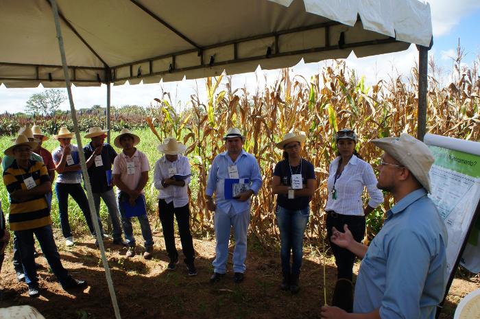 Adilson Nóbrega - Pesquisador Fernando Guedes (à direita) apresenta alternativas de forrageiras adaptadas ao semiárido no Dia de Campo
