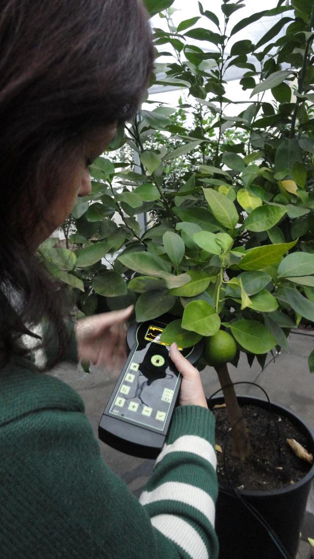 Joana Silva - Pesquisadora Débora Milori testando o aparelho em citros