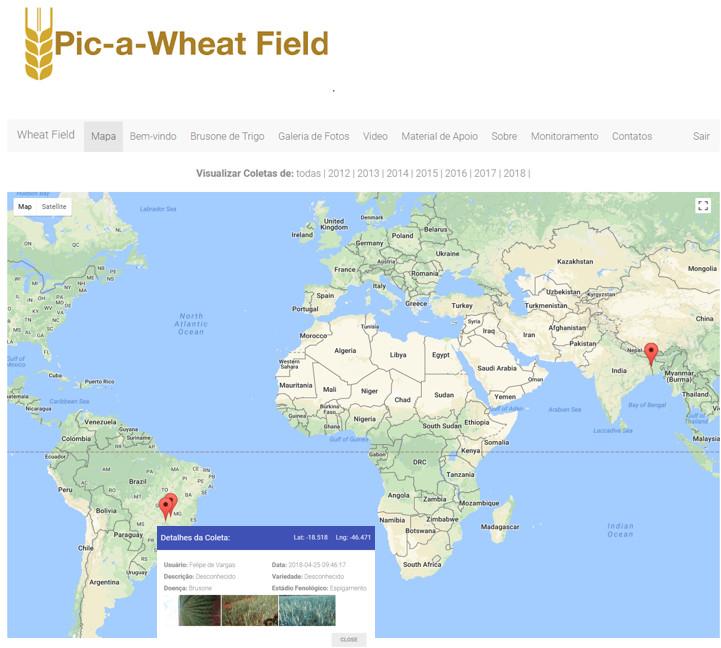 Divulgação - Pic-a-wheat field: aplicativo de monitoramento da brusone no mundo