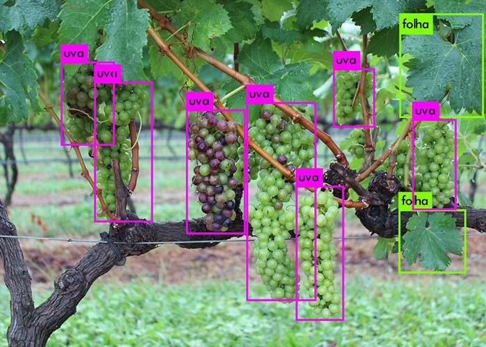Arquivo Embrapa - Visão computacional identifica elementos da planta
