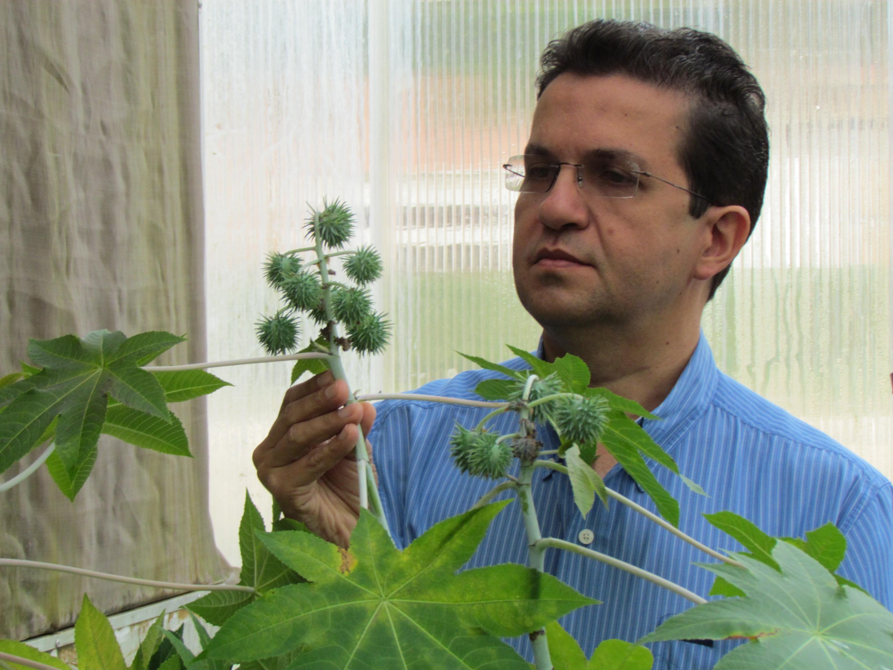 Claudio Bezerra - Aragão: esse resultado promoverá grandes impactos econômicos na cadeia produtiva da mamona